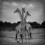 020-black-white-animal-photography.jpg