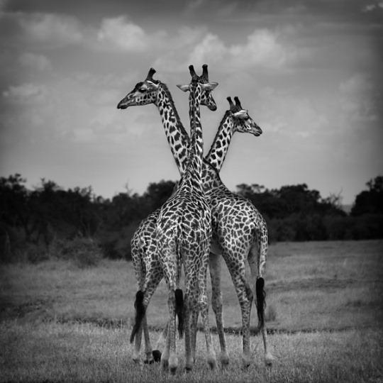 020-black-white-animal-photography