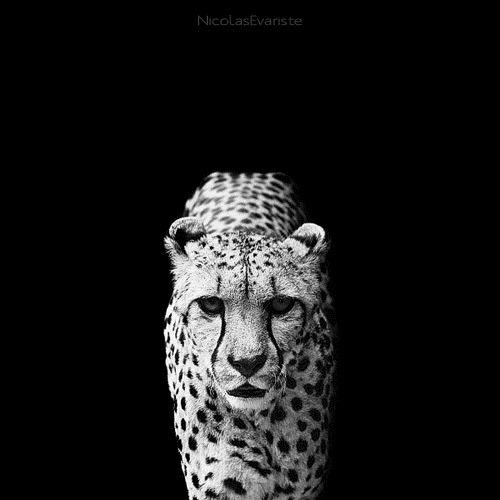 028-black-white-animal-photography