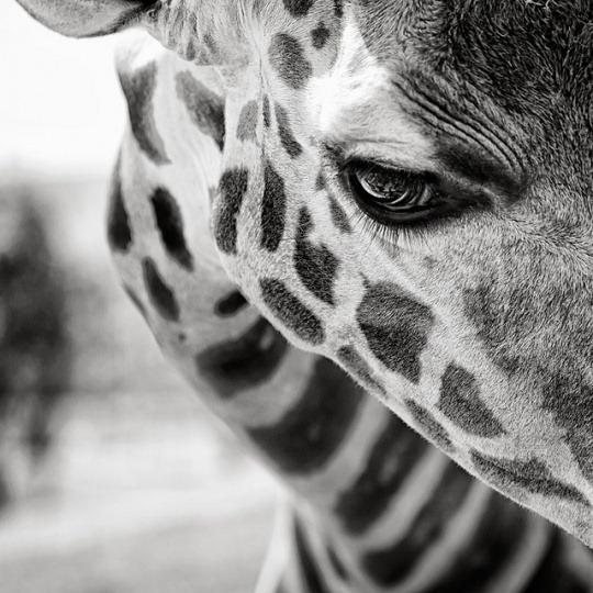050-black-white-animal-photography