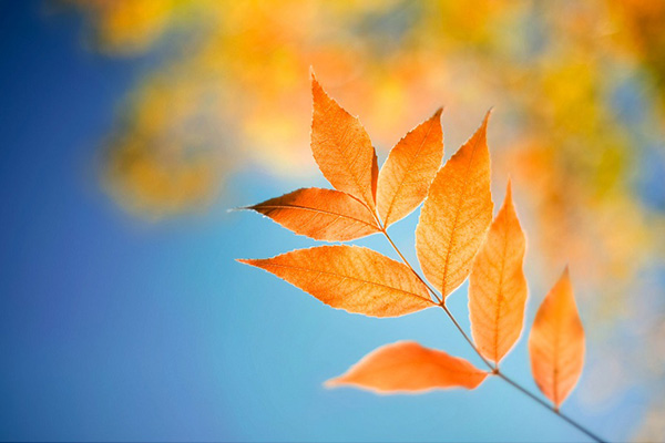 Windows-8-free-wallpaper-leaf